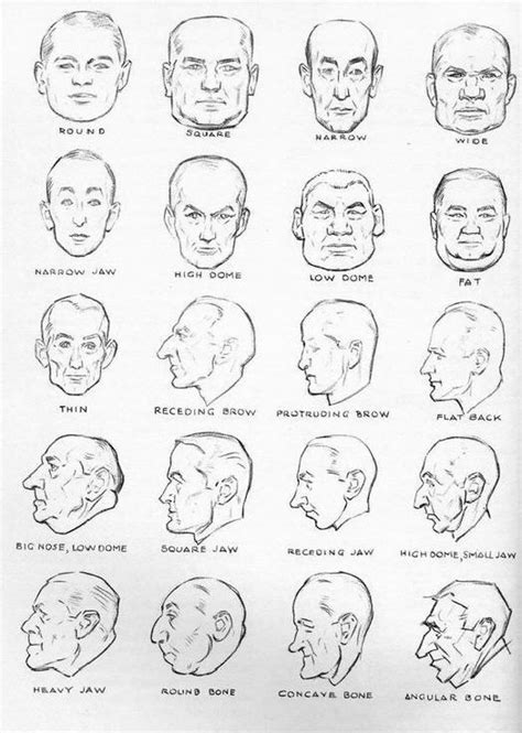 using face shapes and physiognomy for character 17 best images about reference pics on pinterest