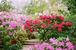flowering shrubs ontario how to flowering trees and shrubs