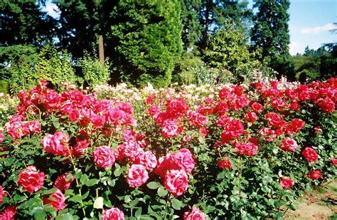 rose gardening visit historic rose gardens