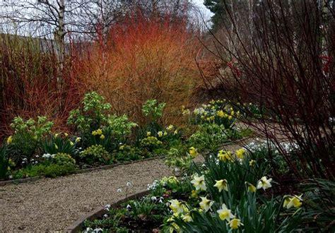 piante con fiori invernali fiori invernali piante da giardino caratteristiche dei