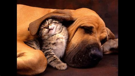 cute cats  dogs  friends youtube