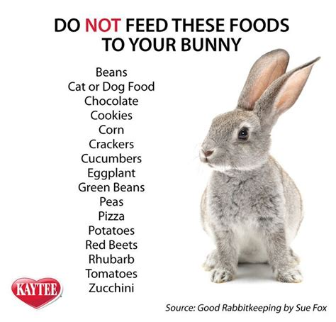 Do You Take Pictures Of Your Food by 82 Best Raising Rabbit Images On Farm Animals