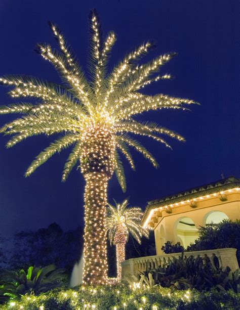 houses with christmas tree lites in palm springs lighting palms trees creates a paradise in your evening landscape outdoor lighting
