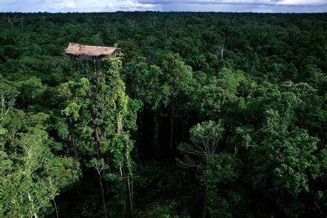 korowai tree houses korowai tribe and their tree houses in papua angryboar