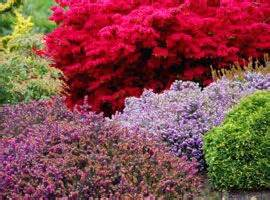 colorful bushes colorful shrubs home outdoor living