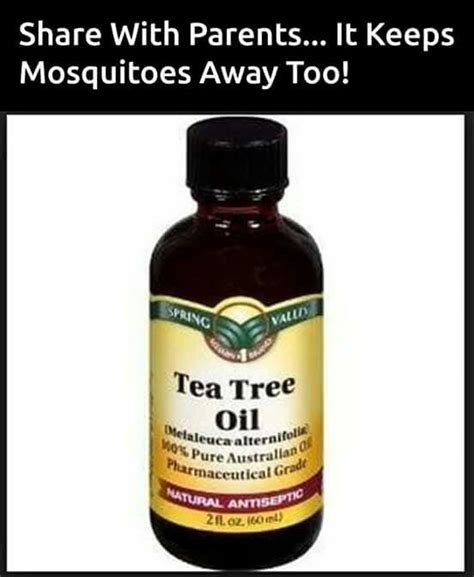 does tea tree oil kill lice mosquitos mosquitos pinterest mosquitoes