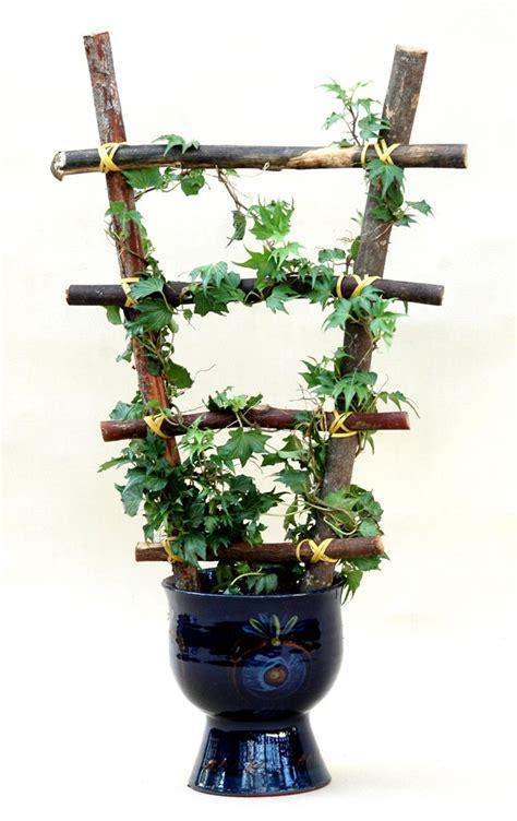 Planter Lierre Grimpant by Lierre Planter Et Tailler Ooreka