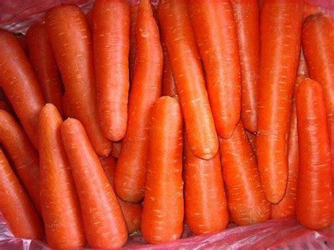 carrot kuroda 400 benih cyber garden carrot kuroda 200benih