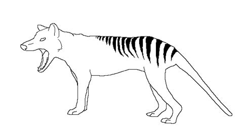 tasmanian tiger coloring page thylacine lineart by drakonicknight on deviantart