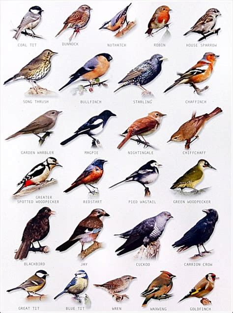 1000 images about birds list names on pinterest garden