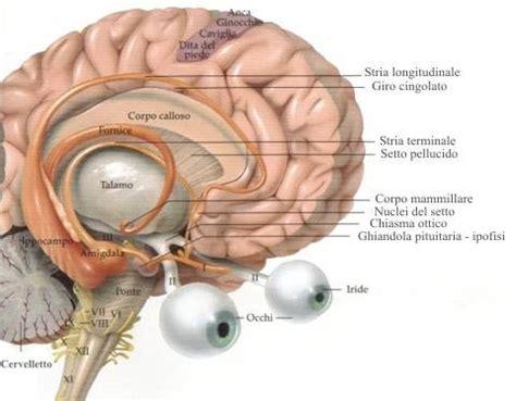 fitte alla testa tumore fig1 3 nervi cranio pontilex