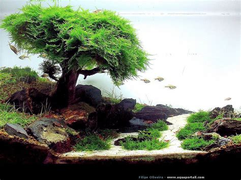 aquascape pictures 2