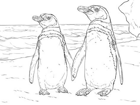 humboldt penguin coloring page 301 moved permanently