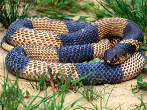 imagenes asombrosas de serpientes banco de im 193 genes fotos de serpientes v 237 voras y culebras