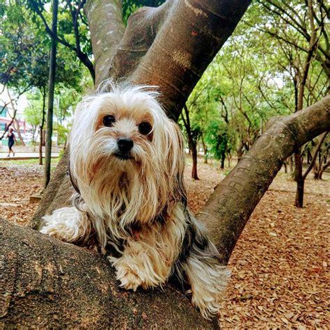 cani ideali per appartamento cani piccola taglia le 36 razze di cani piccoli perfette