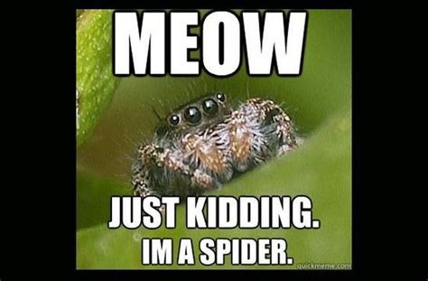 Cute Spider Memes - misunderstood spider meme fun