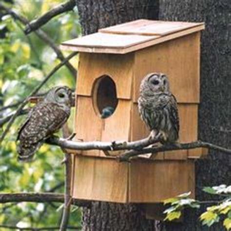 owl in backyard 1000 ideas about owl box on pinterest owl house nest