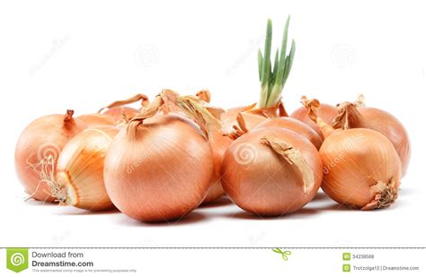 onion link jpg onion link more bing images