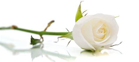 il linguaggio segreto dei fiori riassunto il linguaggio segreto dei fiori la rosa io sono