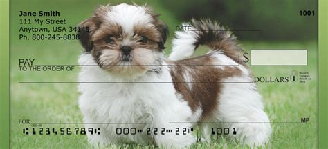 i want to buy a shih tzu puppy shih tzu puppies personal checks