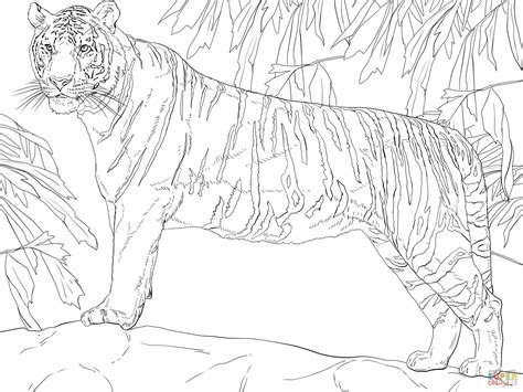 coloring page bengal tiger 301 moved permanently