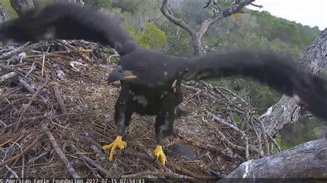 aef nefl eagle nest hope upgrading height with her