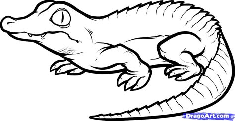 tutorial gambar dinosaurus how to draw a baby crocodile baby crocodile step by step
