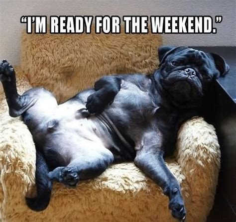 Weekend Dog Meme - 35 funniest lazy meme pictures that will make you laugh