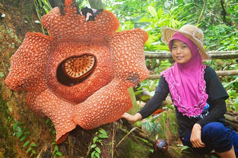 largest flower in the world you seen the largest flower in the world