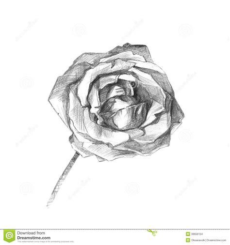 dessin artistique de beau fusain rose illustration stock