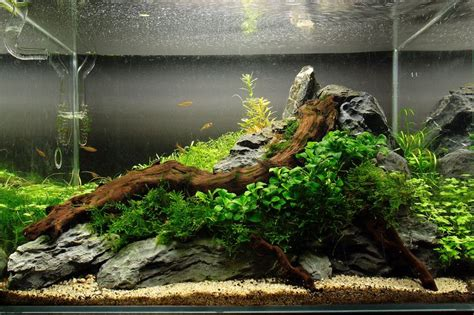 Aquascape Fish by 738 Best Freshwater Aquariums Images On