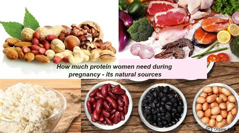 protein needs during pregnancy how much protein need during pregnancy its
