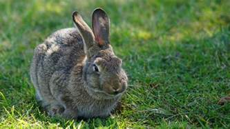 can rabbits see color do rabbits eyesight what color can it see
