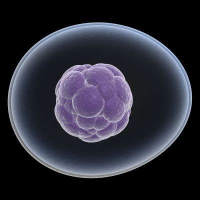 stem cells affordable stem cells transplant in guatemala come to guatemala and give yourself a chance of