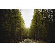 HD Roads Road Landscape Landscapes Trees Forest Pictures