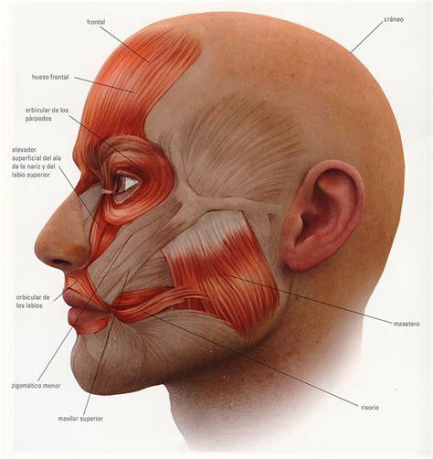 de la cabeza a masaje en cabeza y cuello