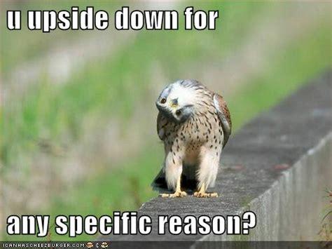 Funny Bird Memes - funny bird quotes quotesgram