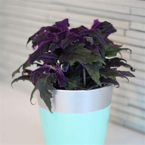 11 best indoor vines and climbers you can grow easily in vining house plants house plan 2017