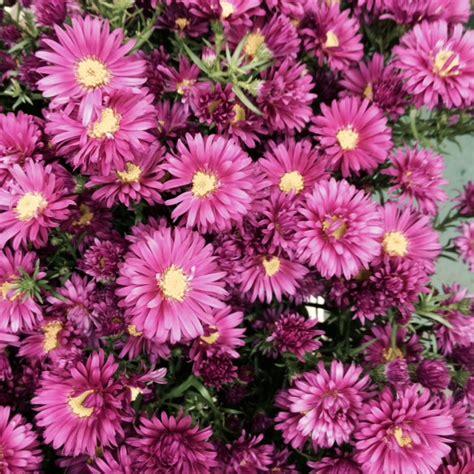 bloemen bezorgen in restaurant septemberkruid paars bloemenkiosk jan cop haarlem