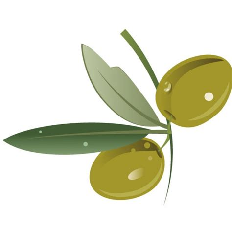 olive vector green olive fruit with leaves vector free download