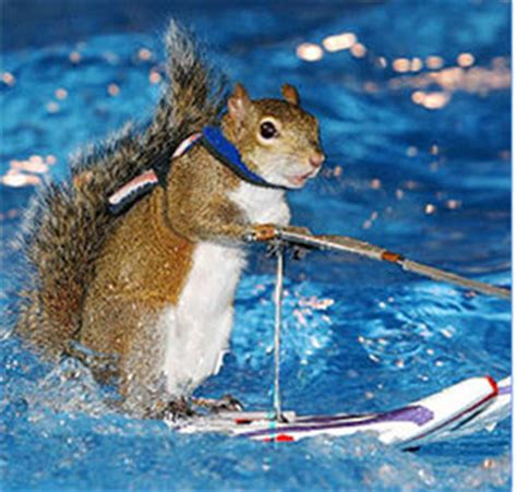 the news for squirrels water skiing squirrel