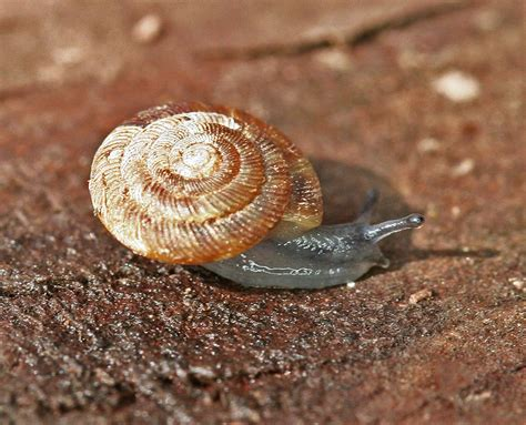 terrestrial snail pictures about animals terrestrial snail macro 2 by wanderingmogwai on deviantart