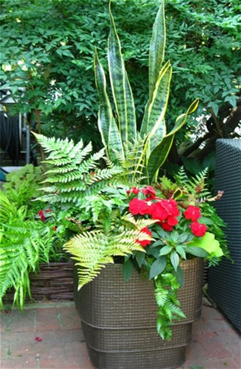 Design For Potted Plants For Shade Ideas Creative Garden Container Pot Combinations And Tips
