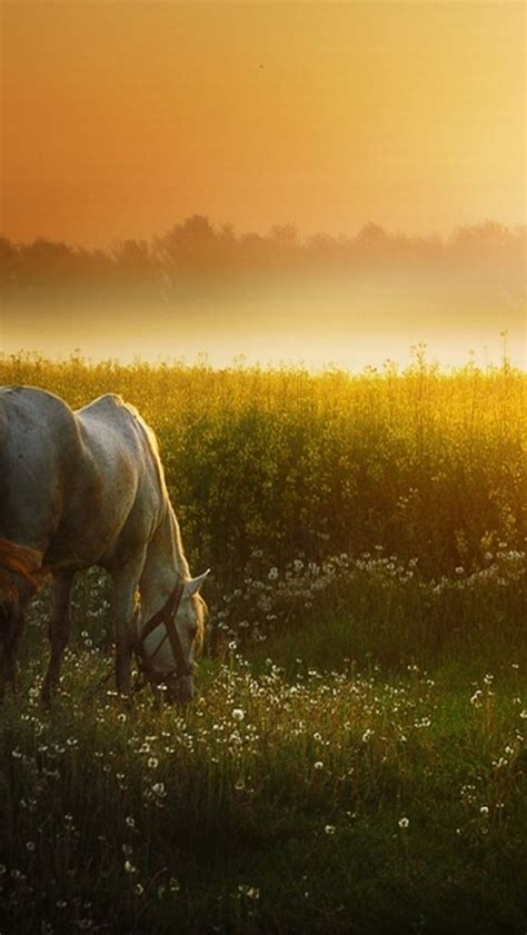 wallpaper iphone 6 horse 640x1136 sunset meadow white horse iphone 5 wallpaper