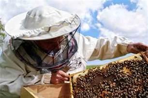 backyard beekeeper bees beyondbones