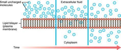 file simple diffusion  plasma membranejpg