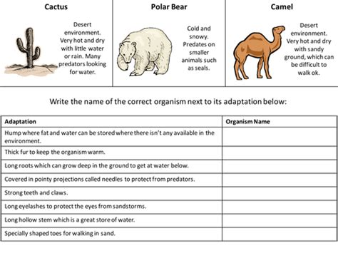 animal adaptations worksheets  grade worksheets master