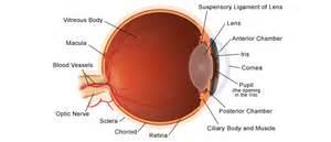 what is the colored part of the eye eye health all guides center for s health