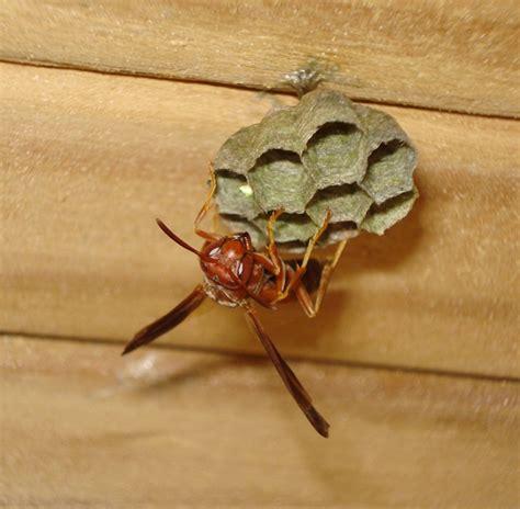 home team pest defense winter garden wasps exterminator pest