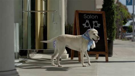 storysite salon subaru tv commercial dog hair salon